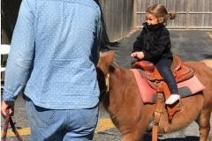 Pony2-e1507598121604